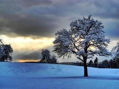 Licht durch die Wolken (almresi1) Tags: clouds tree snow schnee baum welzheimerwald schorndorf lichtstrahl sonnenstrahlen