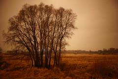 In Chopin's Mood (Sergei P. Zubkov) Tags: velikiynovgorod november 2014 landscape lakeilmen