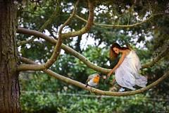 Aífe et le petit rouge-gorge (florence.V) Tags: france hautsdefrance nord 59 salomé jardin hiver photoshop texture petitdelire féérie fée oiseau rougegorge
