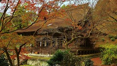 Bare branches (maco-nonch★R) Tags: kyoto ohara 京都 大原 勝林院 gyozan 魚山 声明 syomyo autumn lateautumn branches fallenleaves 紅葉 important place