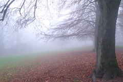 Winter's First Mist (Dave Roberts3) Tags: wales gwent newport landscape trees leaf leaves weather branches park bellevue naturethroughthelens citrit