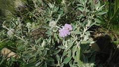 DSCN0807 (ecology_garden) Tags: