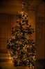 O Christmas Tree (littlestschnauzer) Tags: chatsworth house 2016 december christmas tree lights festive traditional stately home bakewell tourist attraction devonshire duke duchess xmas