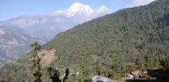 P1100990 After a steep climb looking back to the road-trail we came up from (11-45AM) (ks_bluechip) Tags: nepal trek dec2016 annapurna abc mbc landruk tolga pitamdeorali pothana