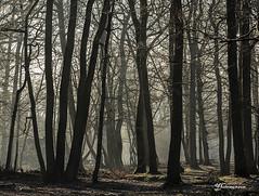 La Forêt enchantée. (vyclem78) Tags: arbres forêt lumière brume soleil rai gel froid hiver ombre végétal yc yclemenson