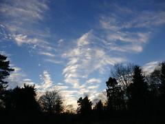 Ciel de cirrus - Forêt Domaniale de Rambouillet - Saint-Léger-en-Yvelines - Yvelines - Île-de-France - France (vanaspati1) Tags: vanaspati1 sky arbres trees ciel de cirrus forêt domaniale rambouillet saintlégerenyvelines yvelines îledefrance france