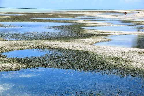 vanderploeg2016 Lau Lagoon (285) seagrass at Fumato