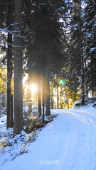 DSC07718 (Veli Vilppu) Tags: skog vinter winter sol sun forest