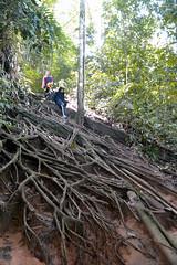 step by step (tasneemy9) Tags: bukit kutu nature malaysia kkb trees river