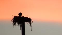 Twilight Time (soniaadammurray - Off) Tags: digitalphotography sunset eagle nest birds quote promise newdawn nature ralphwaldoemerson quartasunset