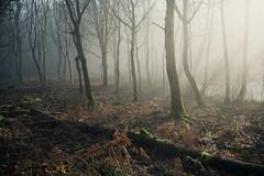 Horsford Woods 24/01/2017 (Matthew Dartford) Tags: eastanglia bokeh bracken branch dark fallen fog foggy forest happisburgh knettishall log lowkey mist misty moody norfolk spooky thetford tree woods