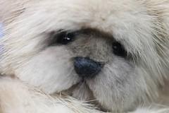 Teddy Bear Mink (kimbearlyoriginal) Tags: teddy bear mink kimbearlys ooak artist handmade
