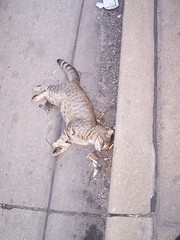 I Saw This Walking To Work Today.....It Made Me Sad  =( (spike55151) Tags: auto road street people cats streets cars car cat truck dead death drive automobile feline kill driving sad who cost kitty tire tires killer transit sin kitties horror murder killed felines trucks roadkill gutter costs autos roads masstransit horrible mass killers kills tragic anti automobiles collateral drivers vile sins collateraldamage careless sinful gutters heartbreaking murderers homocide heartless roadkills deive peoplewhodrive homocides sinnful