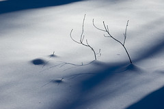 twins (struiling) Tags: winter cambridge light snow nature outdoors shadows canvas blizzard