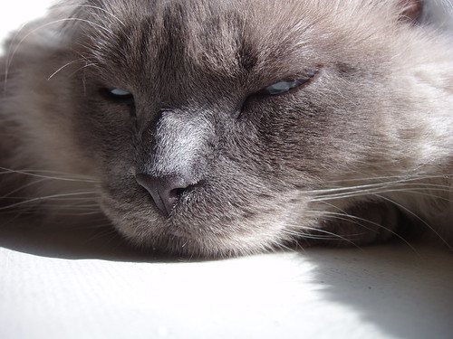 cats dead melamine