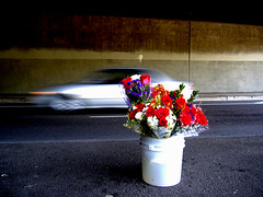 Underpass flowers