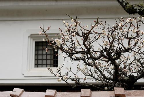 spring of japan