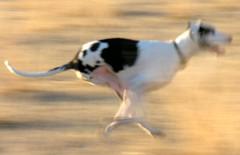 Run Stella Run