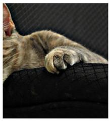 nugget (erin_nadeau) Tags: new england newengland kitty explore meow vacationland thewaylifeshouldbe utata:project=justblack 2006eringonzalez