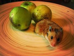 pets bowls