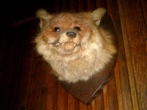 wonky fox