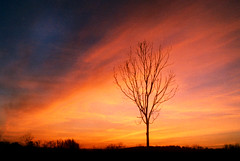 Jimmy's Tree (gordieryan) Tags: ireland sunset sky orange tree stars fire topv333 dusk lonelytree jimmys nov1999 scoreme43 judgmentday54