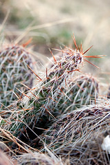 Prickly cactus at the open space (ArtistMelissa) Tags: cactus green i