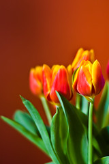 Spring is in the Air (Hoffmann) Tags: flowers red orange green yellow topv111 spring nikon tulips d70 nikond70 2006 vase springhassprung interestingness454 flowersformywife
