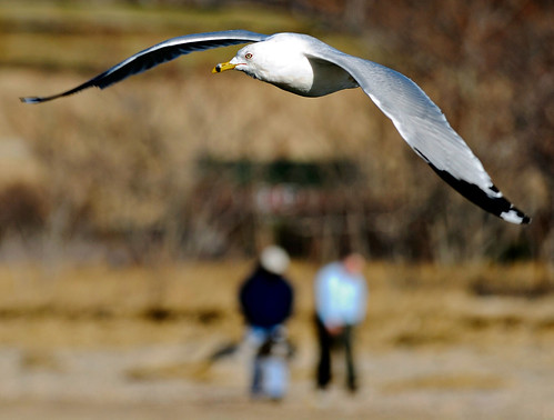 Sadly, the tiny Bokeh Men were unaware that the favorite meal of the giant Long Island Sea Gull is blurry critters