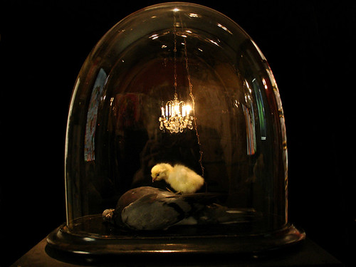 Still Life After death par Polly Morgan, Fine Art Taxidermy