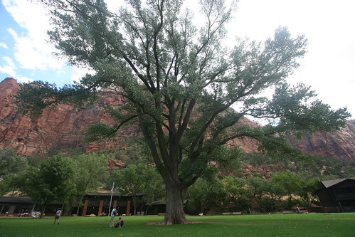 Tree in front of Zion Lodge