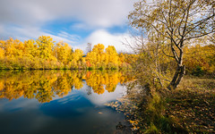 Remembrances (John Westrock) Tags: nature reflection autumn fall autumncolors pond water pacificnorthwest washington eastonponds canoneos5dmarkiii longexposure bwnd1000x canonef1635mmf4lis trees