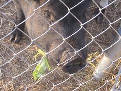 july 09 406 (jessgould) Tags: goatroast july09