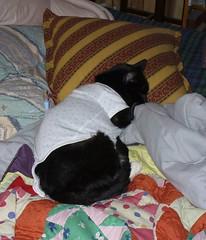 Onesie (Connie Sue2) Tags: cat furry seth onesie