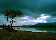 Solitary Tree (ben matthews :::) Tags: landscape scotland skies loch lomond