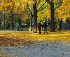 Autumn in Milan (La Lince) Tags: autumn milan autumninmilan yellow leaves people saveme deleteme deleteme2 deleteme3 deleteme4 deleteme5 deleteme6 deleteme7 deleteme8 deleteme9 deleteme10