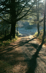 Follow Me (nailbender) Tags: road morning trees mist green sunrise frost invited nailbender jdmckinnon