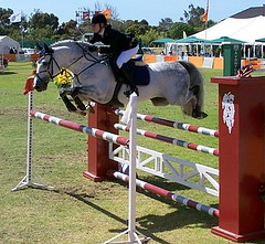 Fishbone - Sunday 27 November 2005 - Show Jumping