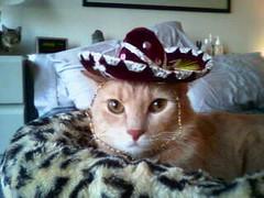 ole, milo kitty! (Malingering) Tags: cats pets cute animals kitten feline milo kittens cuteness