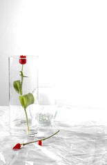 Aseptic (Violator3) Tags: life stilllife white colour glass rose 1025fav still nikon d70s 100v10f minimal womenonly overexposed peppers minimalism creamofthecrop 500v cellophane aseptic