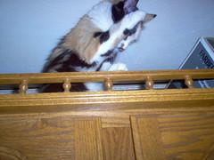 Der  Fur'er (Jessicarabbit1313) Tags: cats calico weebles