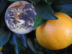 orangeplanet (Tomhee) Tags: orange fruit earth florida citrus tree plants