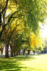 Fall in CSU