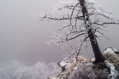 cliff dweller (Chris Lombardi) Tags: winter cliff tree fog montana frost missoula inversion sentinel 3666675