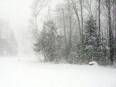Blizzard (Just Me Robin) Tags: winter snow seasons blizzard whereilive gardenangel snowpix justmerobin
