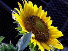 flower1.jpeg (vncreatives) Tags: hope you like it