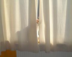 窓の隙間から顔をのぞかせるCat