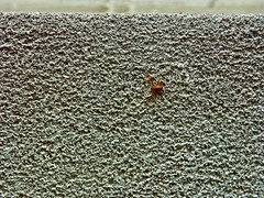 Spider Running Across Window Ledge.jpg (mightyquinninwky) Tags: lexingtonky fayettecountyky kentucky spider concrete fontaineroad