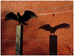 The Raven (paul drzal) Tags: house garden spring philly northernliberties raven edgarallanpoe theraven