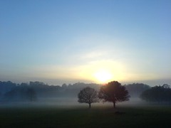 Sungazing Trees (stevec77) Tags: park uk trees winter england sky sun mist london nature topf25 misty wow topv333 k750i lovely1 sunny 100v10f fv5 richmond surrey richmondpark 777v7f bbcopenlab